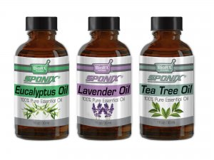 3-Pack Essential Oils Set - (Eucalyptus, Lavender, Tea Tree) - 1 OZ